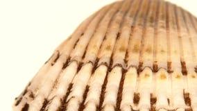 Conchiglia variopinta isolata su un bianco, fine su video d archivio