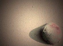 Conchiglia - vongola - mollusco bivalve - sulla sabbia - sfondo naturale astratto immagini stock