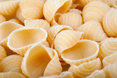 Conchiglie Royalty Free Stock Photos