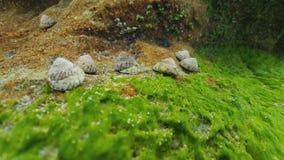 Conchiglie, alghe, Australia Fotografia Stock