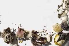 Conchiglie, artiglio del granchio, pietre, coralli su fondo bianco, concezione di viaggio, fuoco selettivo fotografia stock