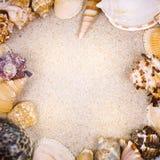 Conchiglie con la sabbia come fondo Immagini Stock Libere da Diritti