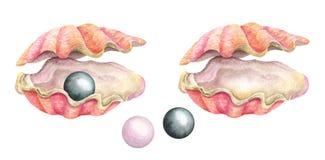 Conchiglie con le perle Illustrazione dell'acquerello Fotografia Stock
