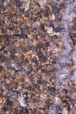 Conchiglie, coralli, pietre del ciottolo per fondo Fotografie Stock Libere da Diritti