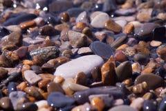Conchiglie, coralli, pietre del ciottolo per fondo Fotografie Stock