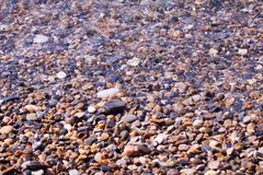 Conchiglie, coralli, pietre del ciottolo per fondo Immagini Stock
