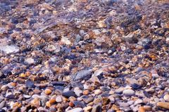 Conchiglie, coralli, pietre del ciottolo per fondo Immagine Stock Libera da Diritti