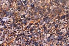 Conchiglie, coralli, pietre del ciottolo per fondo Fotografia Stock