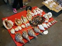 Conchiglie del mercato di notte dei frutti di mare del mercato della Malesia Sabah Kota Kinabalu Filipino immagini stock