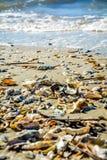 Conchiglie della costa dell'oceano Fotografia Stock