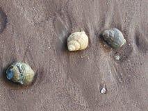 3 conchiglie delle coperture della buccina sulla sabbia Immagini Stock