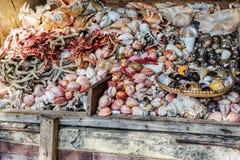 Conchiglie di Asssorted al mercato dei frutti di mare Immagini Stock