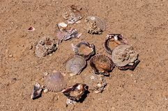 Conchiglie di Brocken sulla spiaggia di sabbia al giorno di estate caldo del sole Vista da sopra Fotografie Stock Libere da Diritti