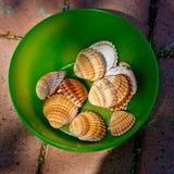 Conchiglie di mare in una ciotola verde Lizenzfreies Stockfoto