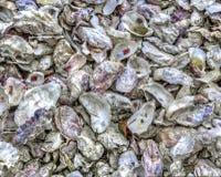 Conchiglie di ostrica Immagine Stock