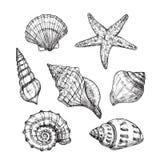 Conchiglie disegnate a mano Mollusco tropicale dei crostacei delle stelle marine nello stile d'incisione d'annata Vettore isolato royalty illustrazione gratis