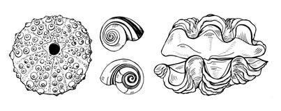 Conchiglie e coperture del riccio di mare su fondo bianco immagini stock