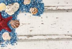 Conchiglie e fondo delle stelle marine Fotografia Stock Libera da Diritti