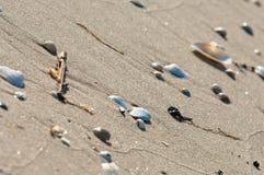 Conchiglie e sabbia come fondo, spiaggia di estate Fotografia Stock