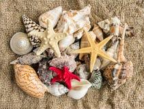 Conchiglie e seastar sulla sabbia di una spiaggia Immagine Stock