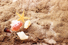 Conchiglie e stelle marine fotografie stock libere da diritti