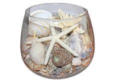 Conchiglie e stelle marine in ciotola di vetro Immagini Stock