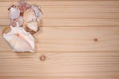 Conchiglie e stelle marine su un fondo di legno Immagini Stock