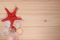 Conchiglie e stelle marine su un fondo di legno Fotografia Stock Libera da Diritti