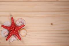 Conchiglie e stelle marine su un fondo di legno Fotografie Stock