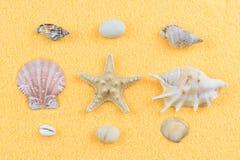 Conchiglie e stelle marine sulla vista superiore decorativa della sabbia fotografie stock libere da diritti