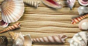 conchiglie esotiche sulla sabbia Fotografie Stock
