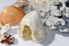 Conchiglie, fossile di corallo e ciottoli Fotografie Stock