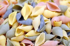 Conchiglie gourmet pasta Royalty Free Stock Images