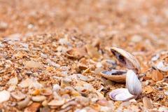 Conchiglie nella sabbia sulla spiaggia immagini stock libere da diritti