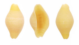 Conchiglie pasta shells Stock Photos