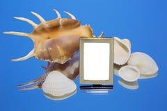 Conchiglie, specchio, struttura della foto Fotografie Stock Libere da Diritti