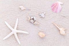 Conchiglie, stelle marine e granchio sulla sabbia della spiaggia per estate Fotografia Stock