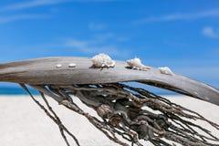 Conchiglie su foglia di palma sulla spiaggia Immagini Stock