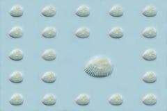 Conchiglie su fondo blu Fotografie Stock
