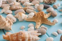 Conchiglie su legno blu, fondo di vacanza del mare Fotografia Stock Libera da Diritti