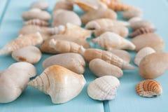 Conchiglie su legno blu, fondo di vacanza del mare Immagini Stock