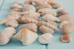 Conchiglie su legno blu, fondo di vacanza del mare Immagini Stock Libere da Diritti