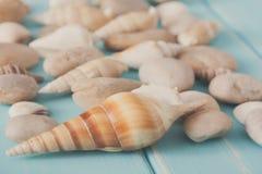 Conchiglie su legno blu, fondo di vacanza del mare Fotografia Stock