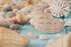Conchiglie su legno blu, fondo di vacanza del mare Fotografie Stock