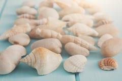 Conchiglie su legno blu, fondo di vacanza del mare Immagine Stock Libera da Diritti