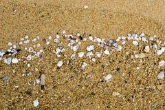 Conchiglie su Sandy Shoreline Fotografia Stock