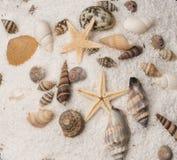 Conchiglie su un letto della sabbia Immagine Stock Libera da Diritti