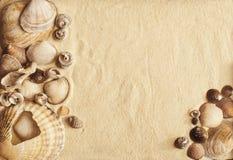 Conchiglie su una sabbia Immagini Stock