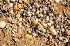 Conchiglie su una spiaggia e su una sabbia di estate come fondo S fotografie stock