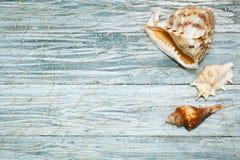 Conchiglie sui bordi bianchi Fotografia Stock